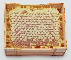 Méhpempő egyenesen a kaptárból