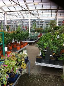 A kertészeti webáruházban mindent megtalál